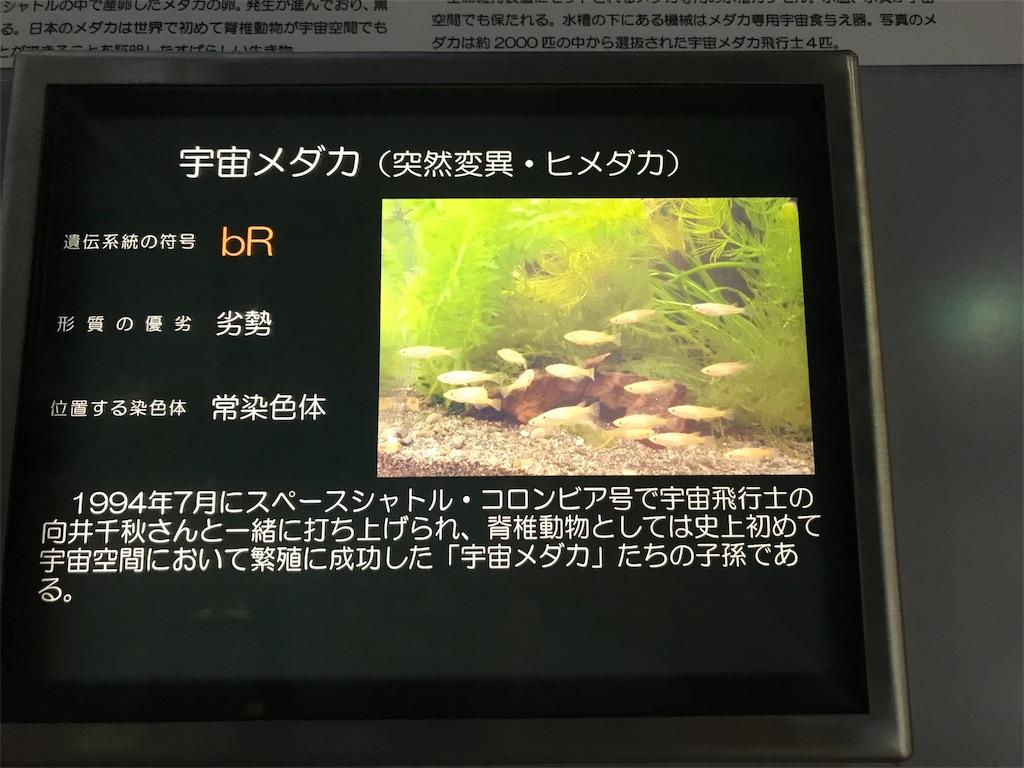 f:id:shimauma2692:20180628182809j:image