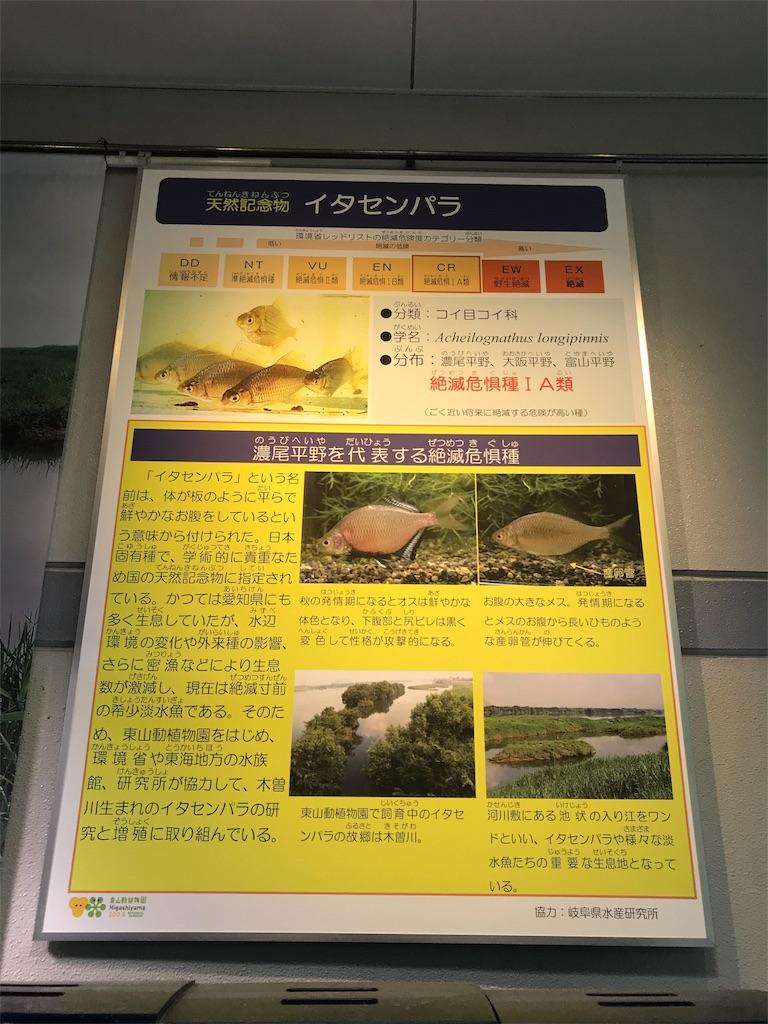f:id:shimauma2692:20180628182831j:image