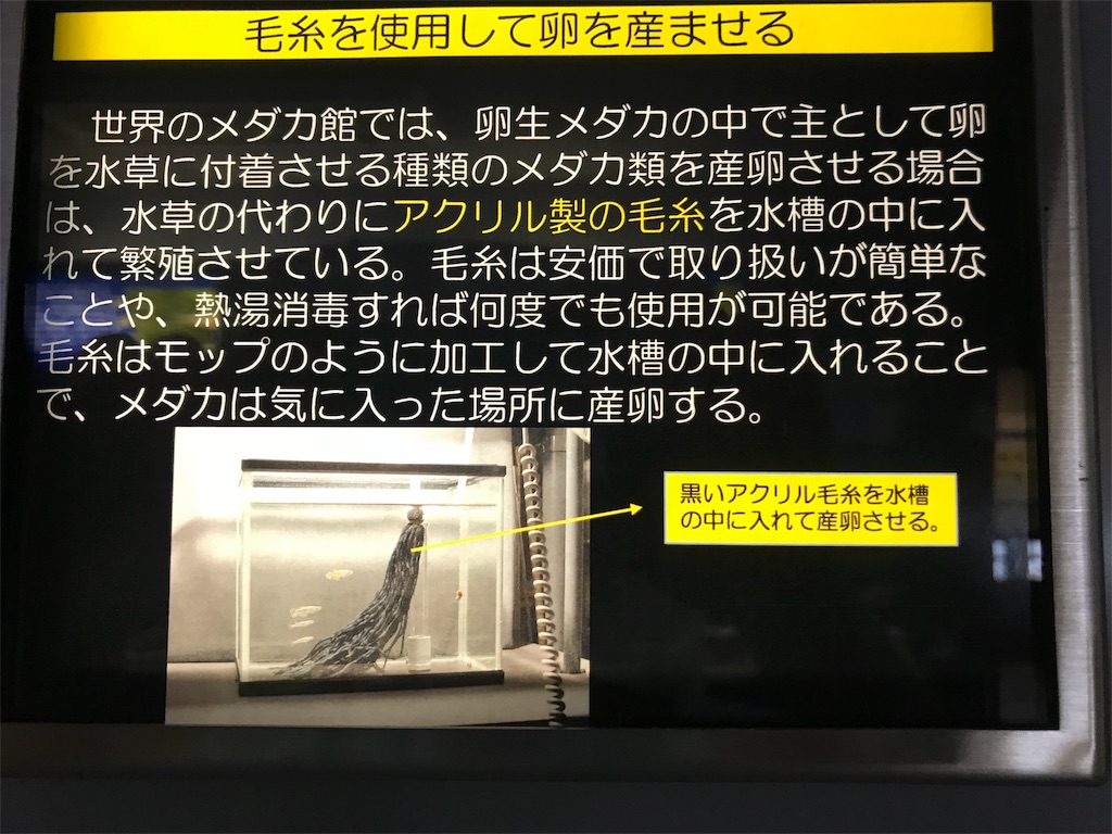 f:id:shimauma2692:20180628183033j:image