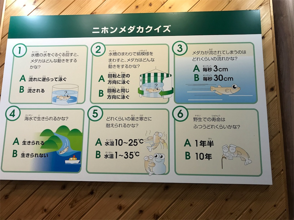 f:id:shimauma2692:20180628183048j:image