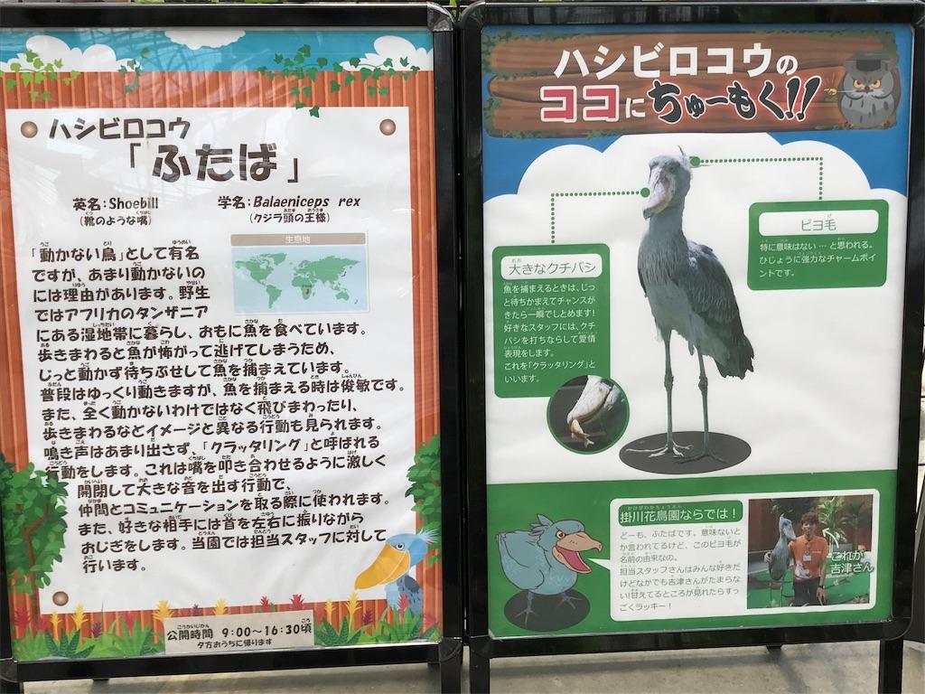 f:id:shimauma2692:20180723112950j:image