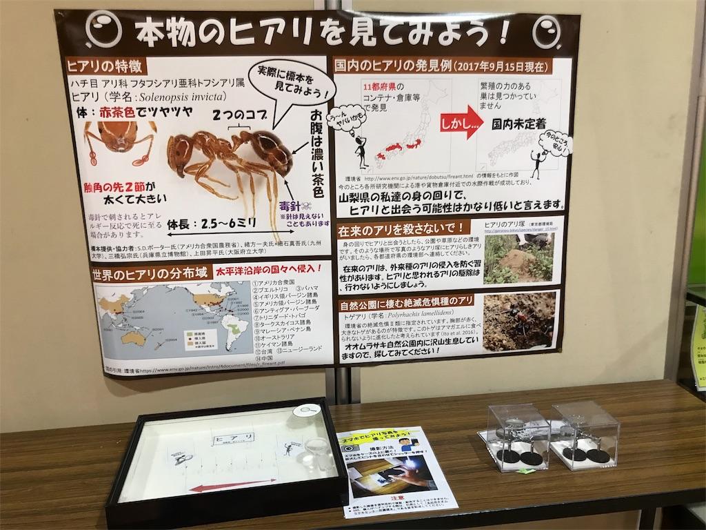 f:id:shimauma2692:20180817082442j:image