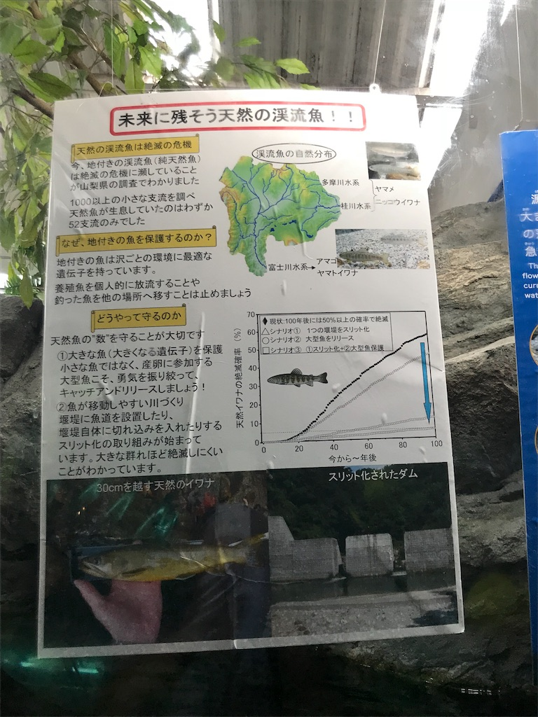f:id:shimauma2692:20180817163146j:image