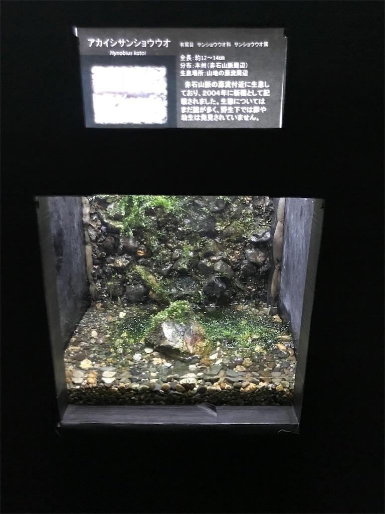 f:id:shimauma2692:20180824192137j:image