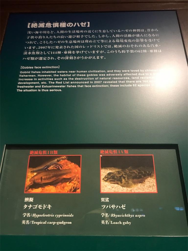 f:id:shimauma2692:20180826145529j:image