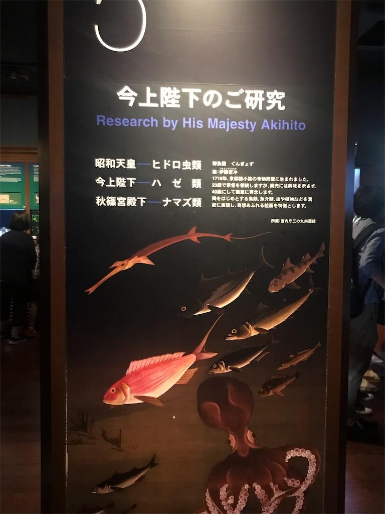 f:id:shimauma2692:20180826145642j:image