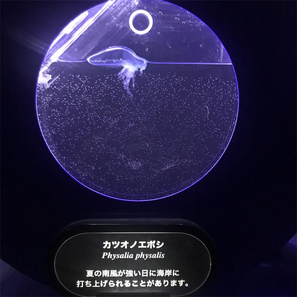 f:id:shimauma2692:20180826192634j:image