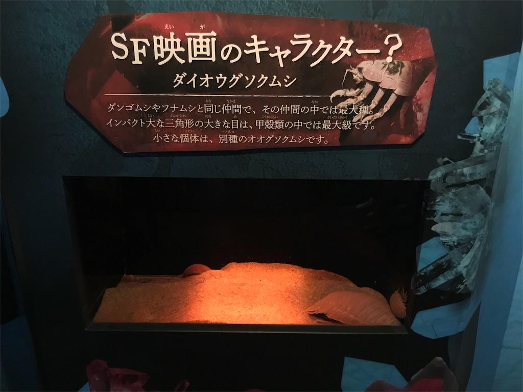 f:id:shimauma2692:20181216210456j:image