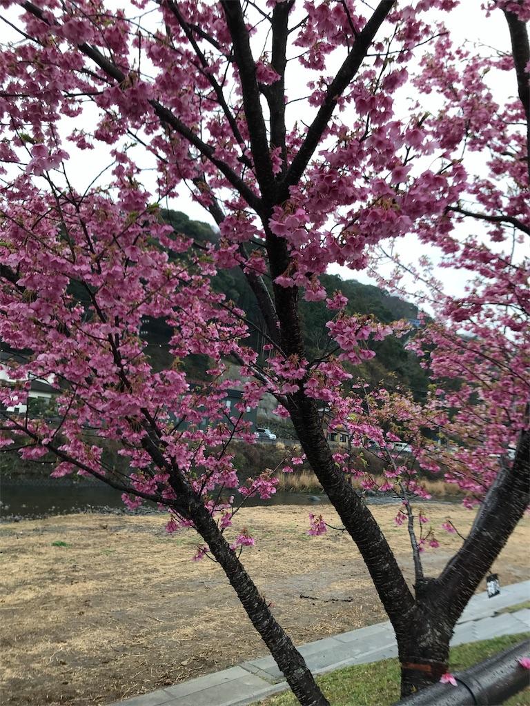 f:id:shimauma2692:20190311202739j:image