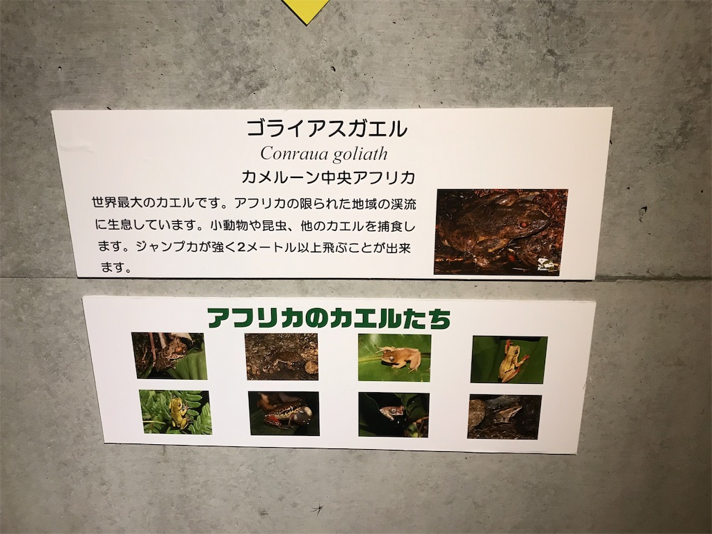 f:id:shimauma2692:20190412174418j:image