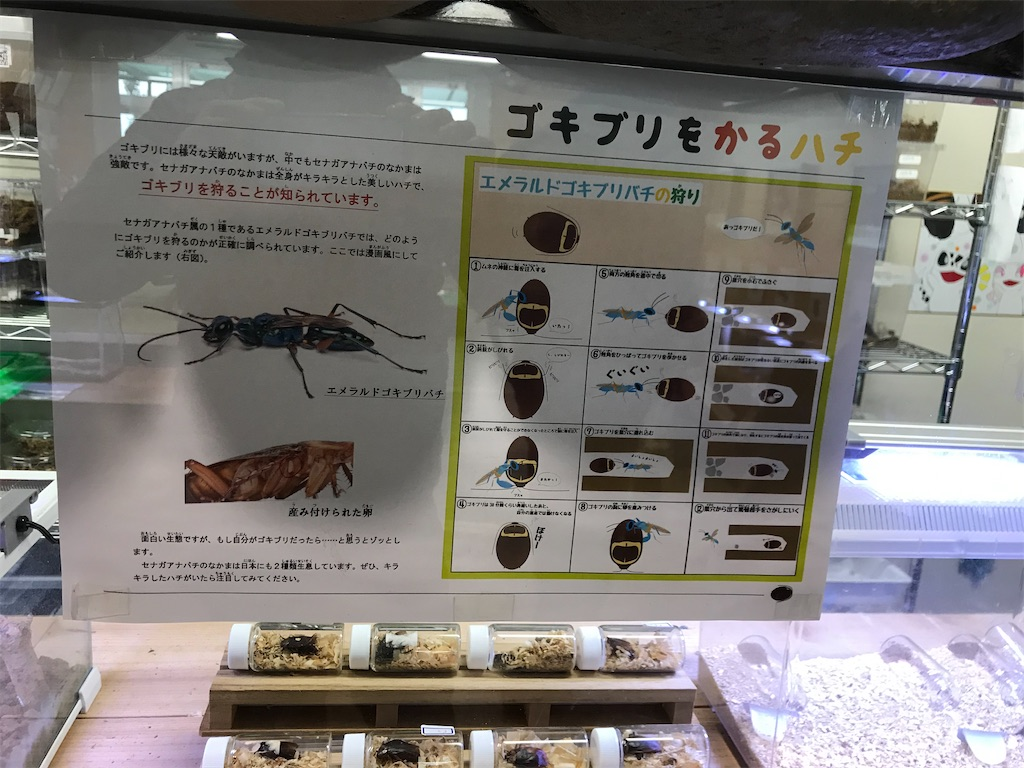 f:id:shimauma2692:20200112185221j:image