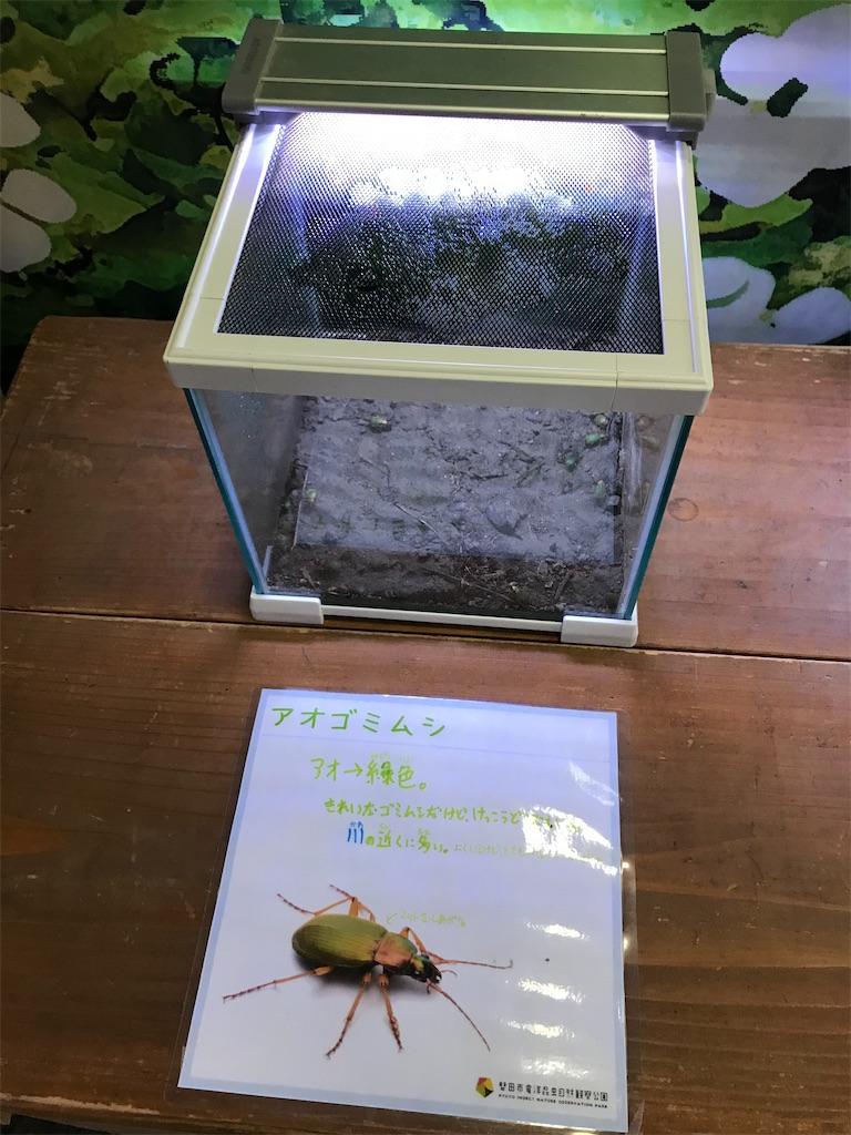 f:id:shimauma2692:20200112185820j:image