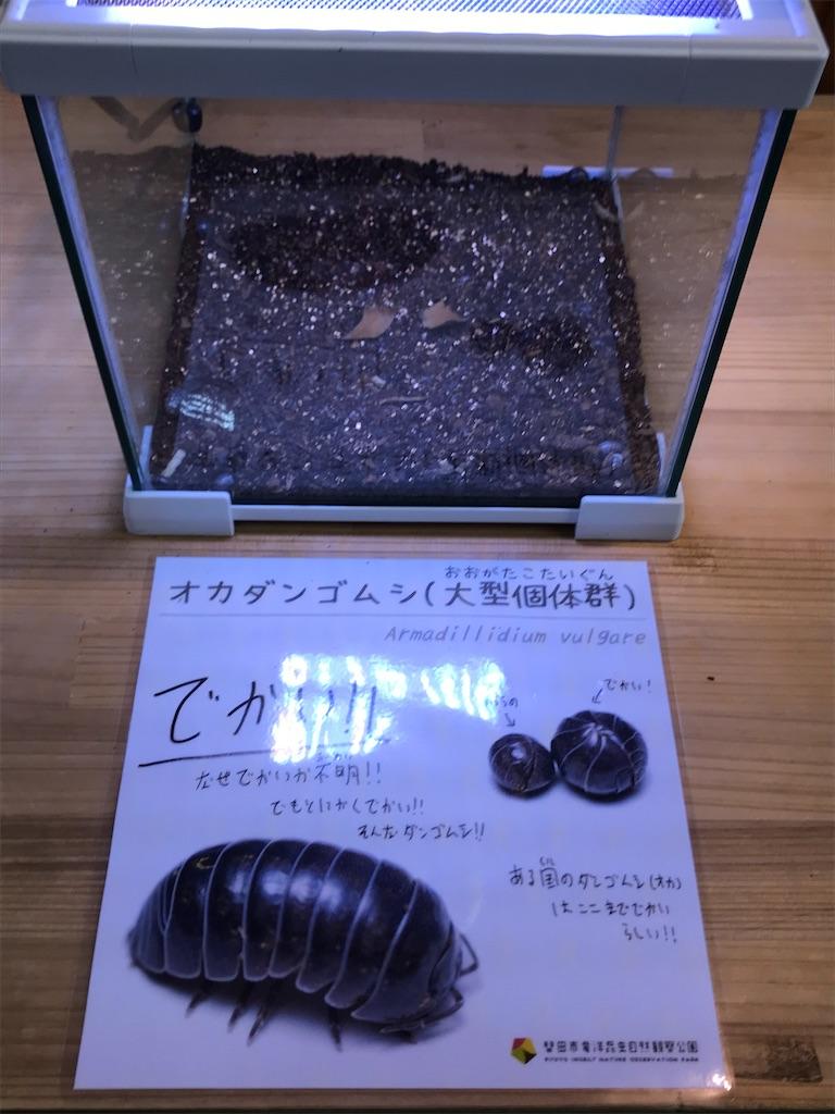 f:id:shimauma2692:20200112212445j:image