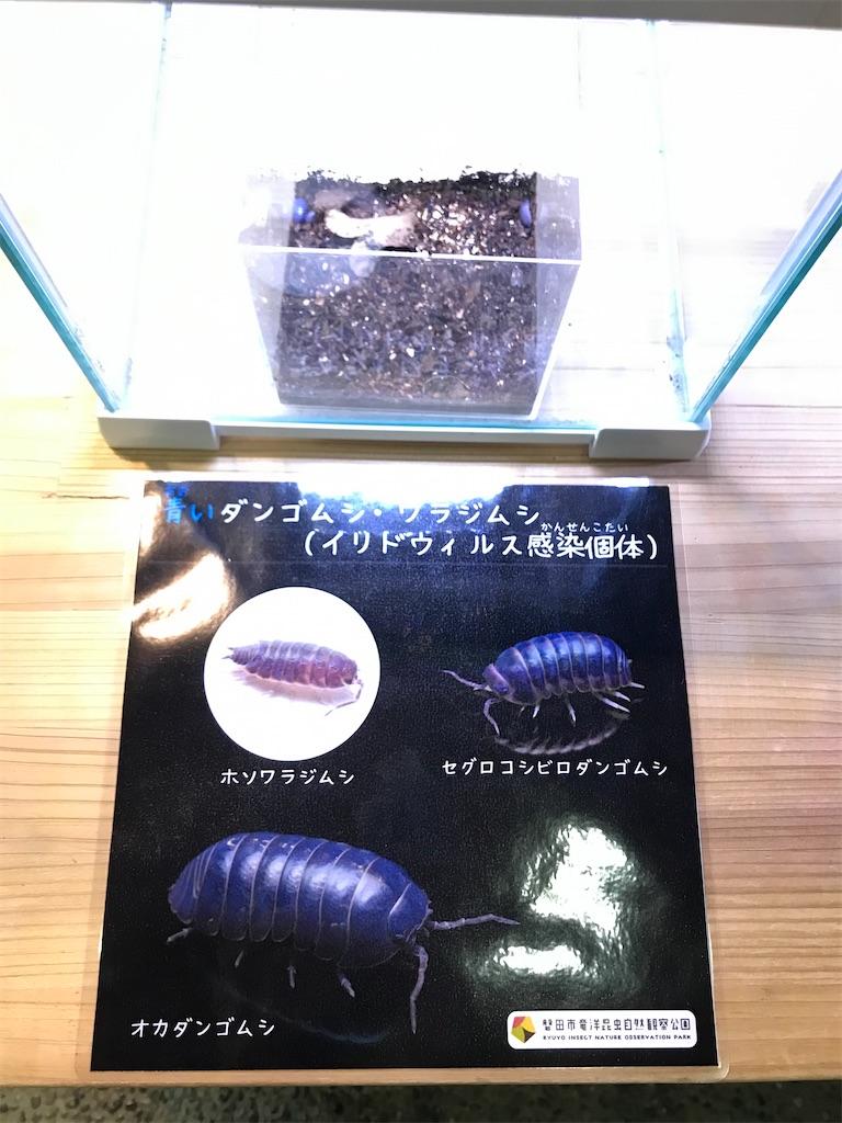 f:id:shimauma2692:20200112215411j:image