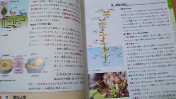 f:id:shimausj:20210420124343j:plain