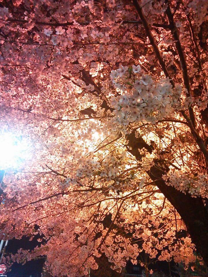 f:id:shimbashiekimae:20170406183413j:plain