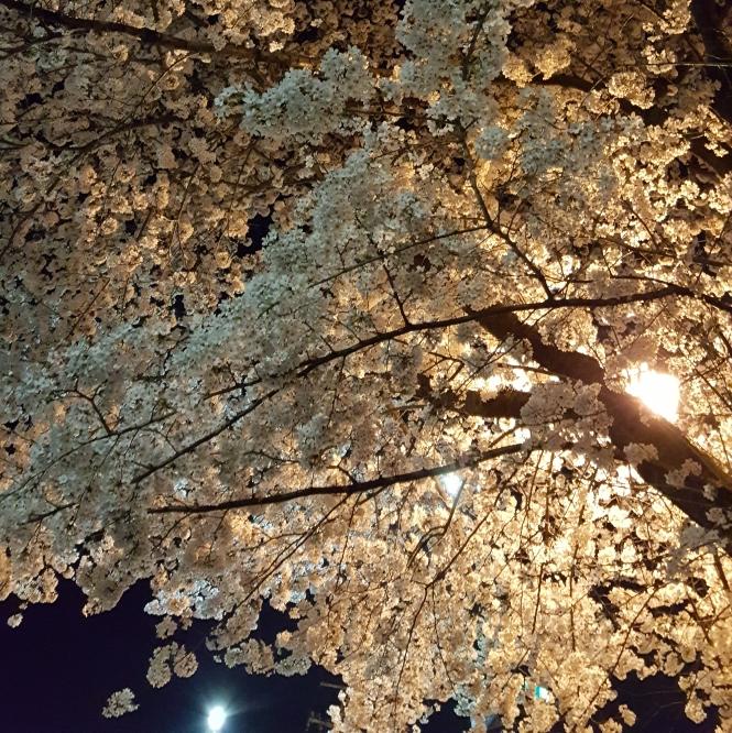 f:id:shimbashiekimae:20180329185633j:plain