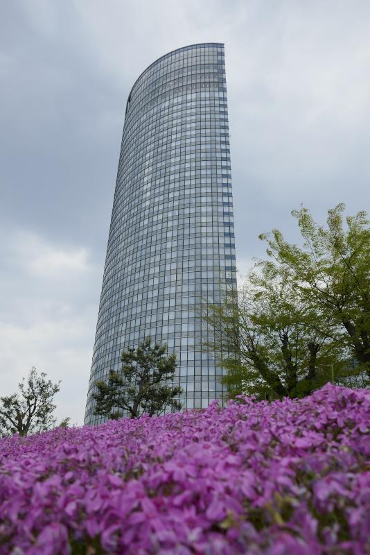 びわ湖大津プリンスホテルと芝桜