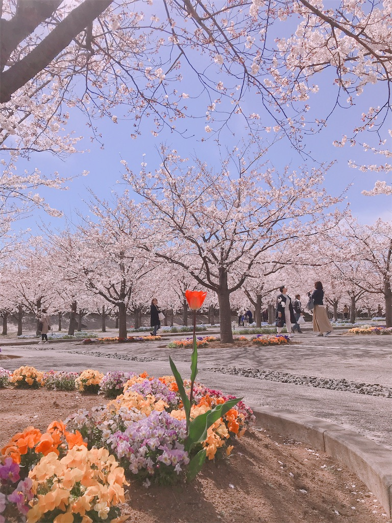 f:id:shimessi:20190405225107j:image