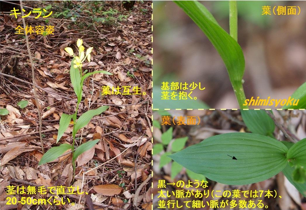 f:id:shimisyoku:20200524072649j:plain