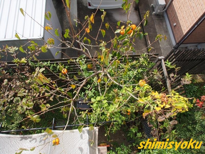 f:id:shimisyoku:20201026221335j:plain