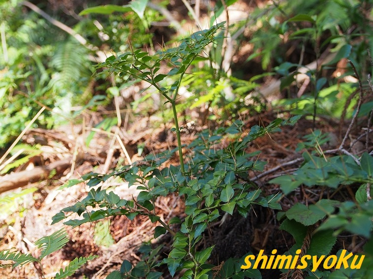 f:id:shimisyoku:20210103122020j:plain