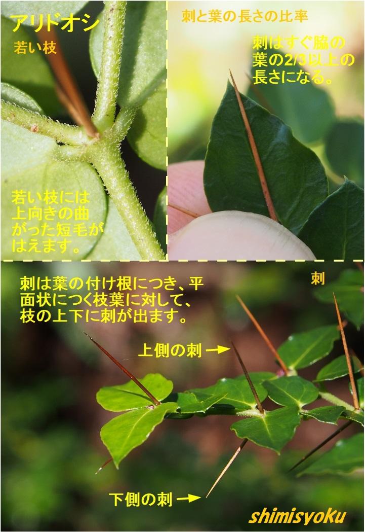 f:id:shimisyoku:20210103122634j:plain