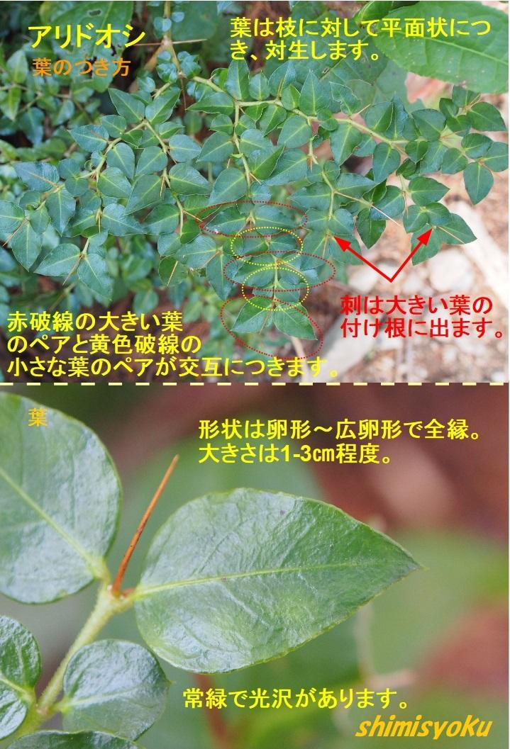 f:id:shimisyoku:20210103122802j:plain