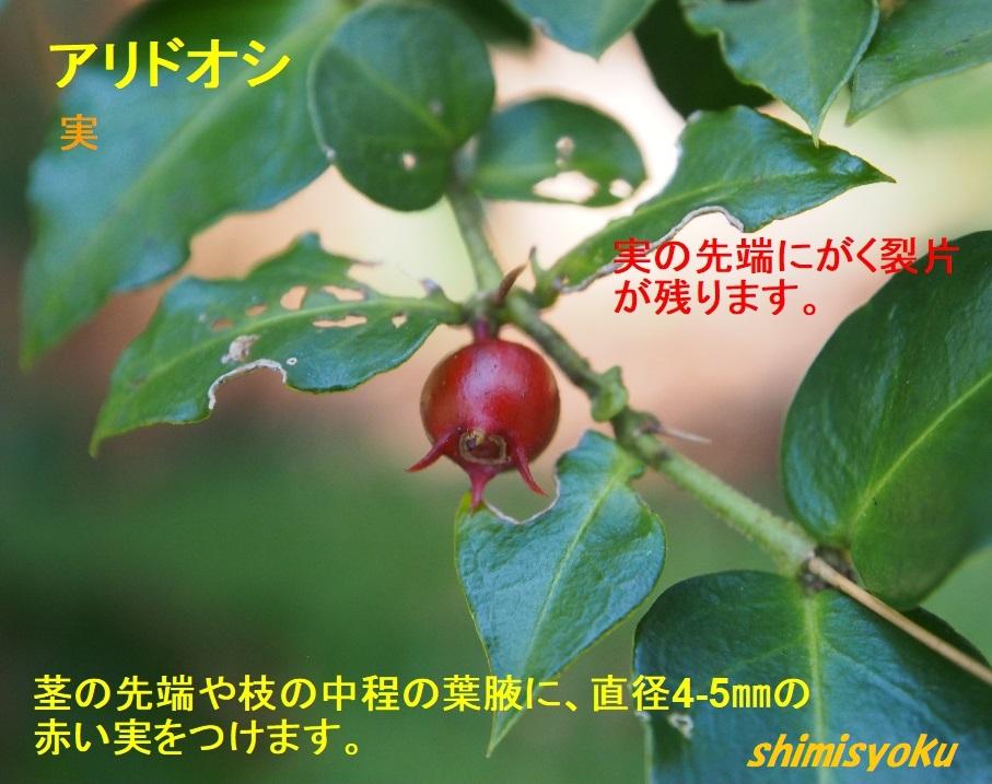 f:id:shimisyoku:20210103122829j:plain