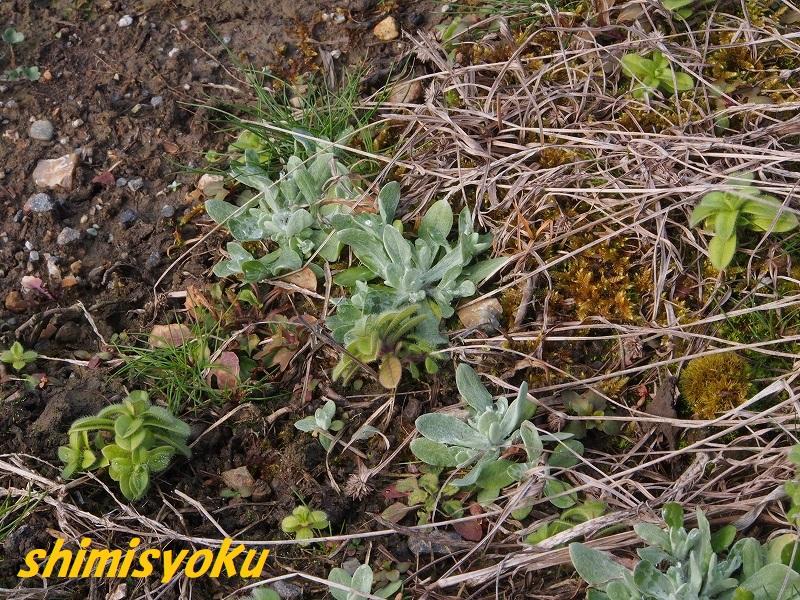 f:id:shimisyoku:20210106184325j:plain