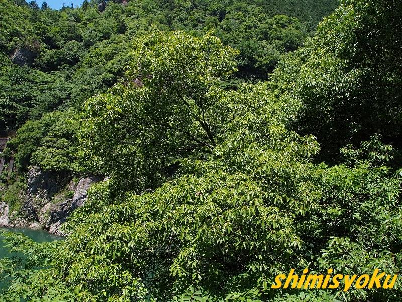 f:id:shimisyoku:20210110063527j:plain