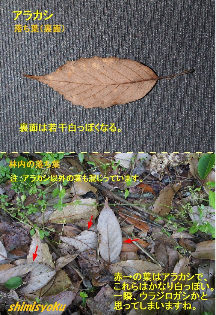 f:id:shimisyoku:20210110064127j:plain