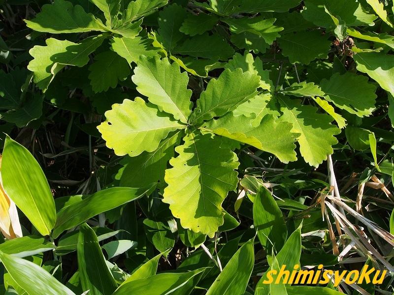 f:id:shimisyoku:20210110155114j:plain