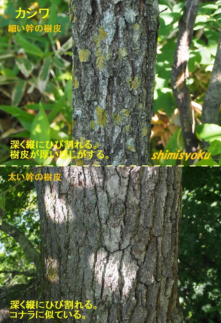 f:id:shimisyoku:20210110155559j:plain