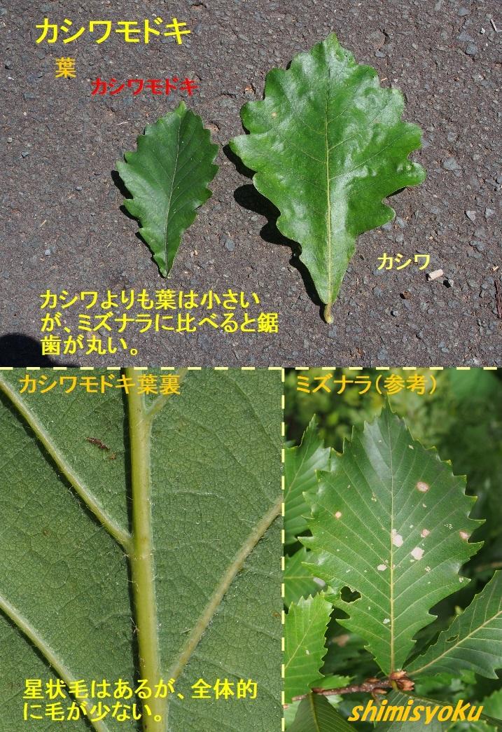 f:id:shimisyoku:20210110155858j:plain