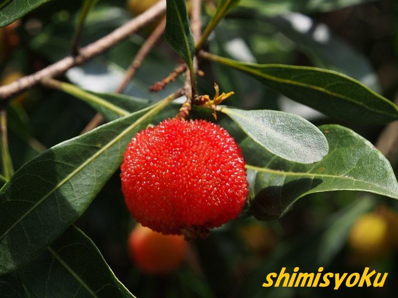 f:id:shimisyoku:20210116133559j:plain