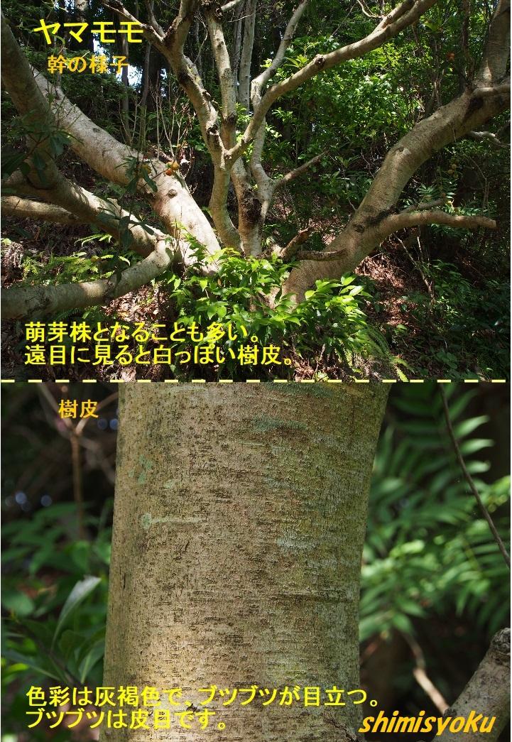 f:id:shimisyoku:20210116134446j:plain
