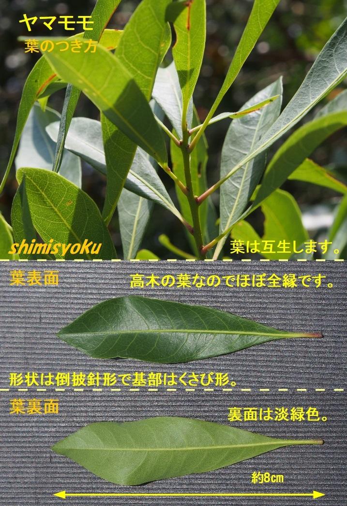 f:id:shimisyoku:20210116134509j:plain