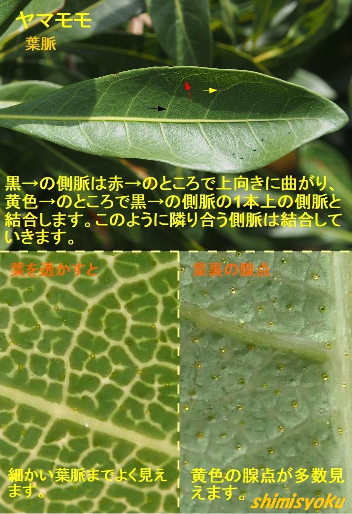 f:id:shimisyoku:20210116134535j:plain
