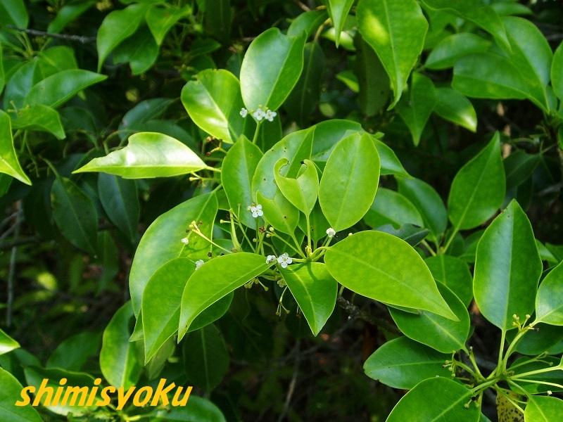 f:id:shimisyoku:20210120203521j:plain