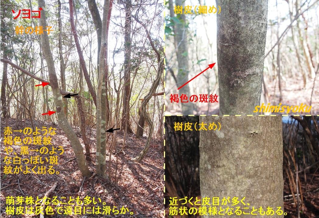 f:id:shimisyoku:20210120203821j:plain
