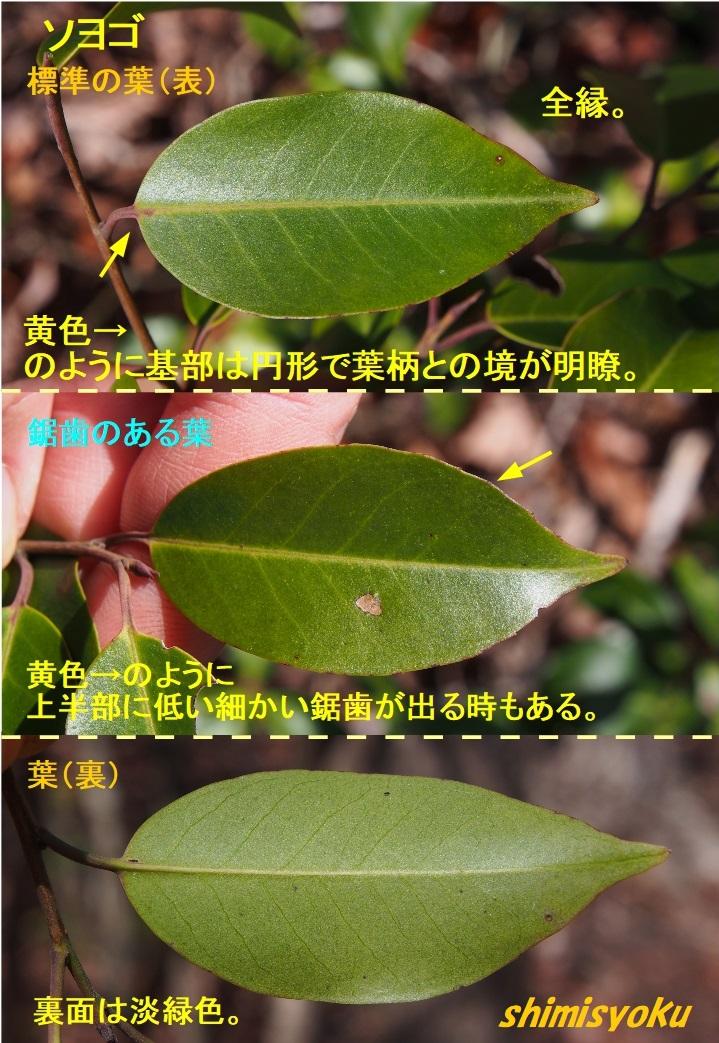 f:id:shimisyoku:20210120204004j:plain