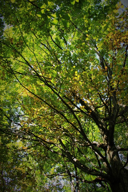 f:id:shimizu-satoyama:20161001090025j:plain
