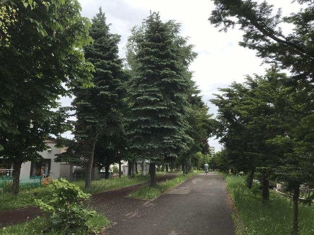 f:id:shimizu-satoyama:20170610205242j:plain