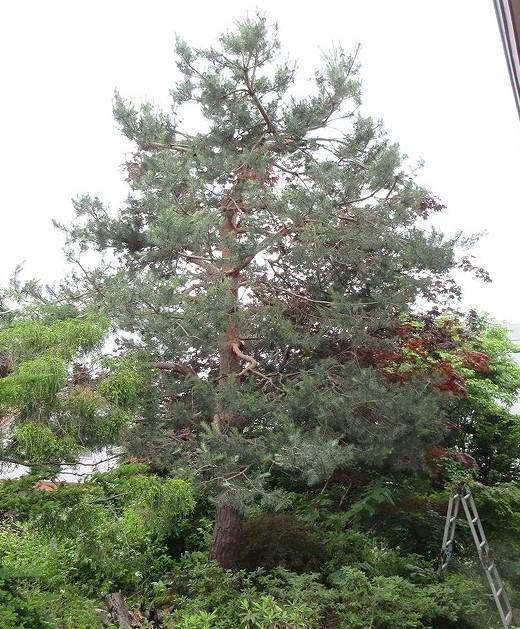 f:id:shimizu-satoyama:20201119134445j:plain