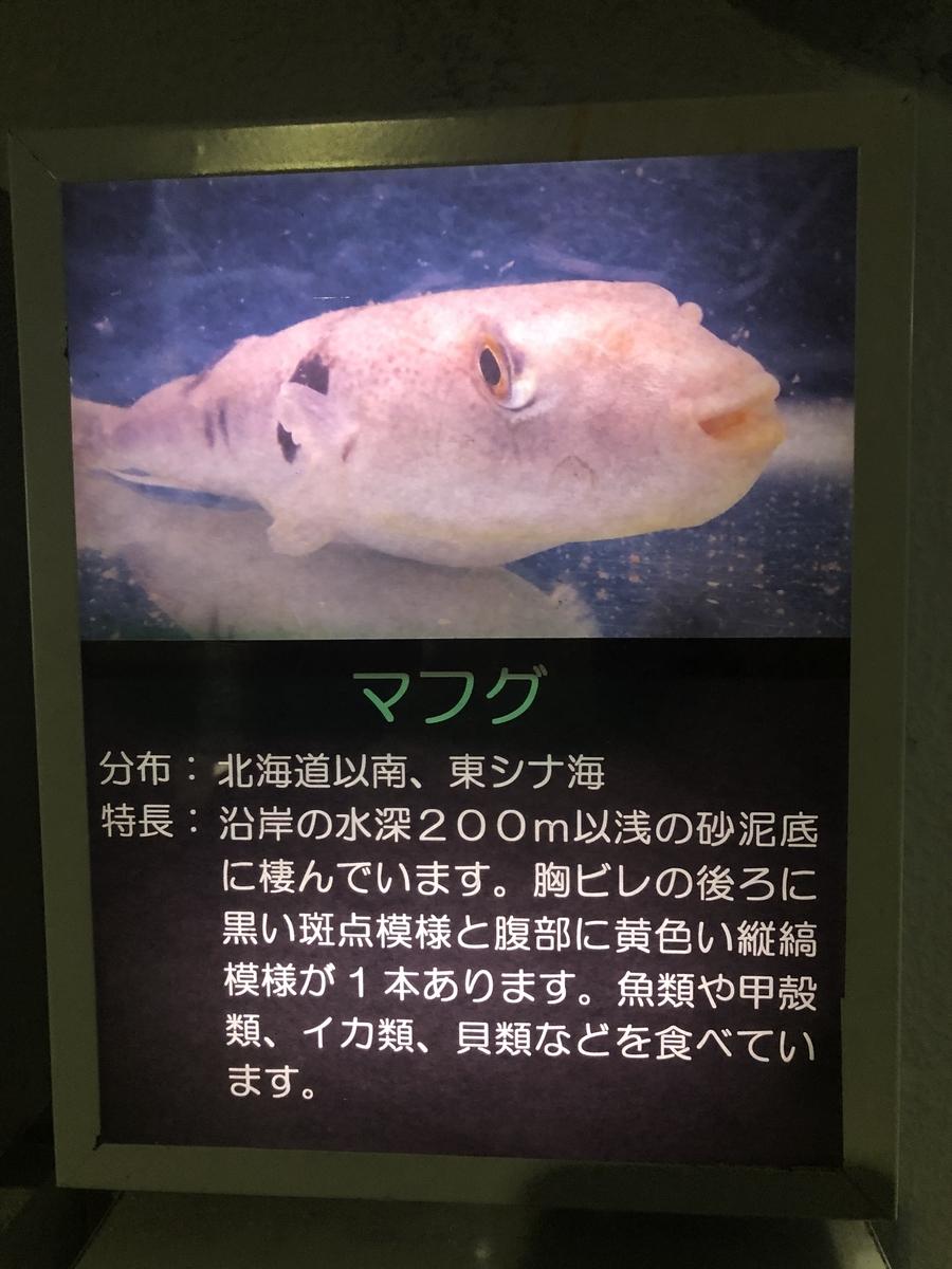 f:id:shimizu_blog:20190511232656j:plain