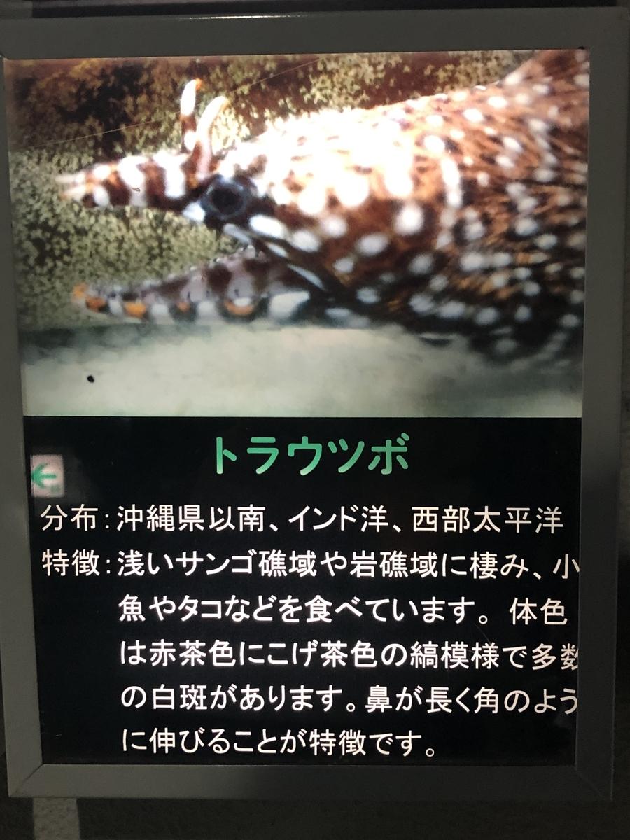 f:id:shimizu_blog:20190511233051j:plain
