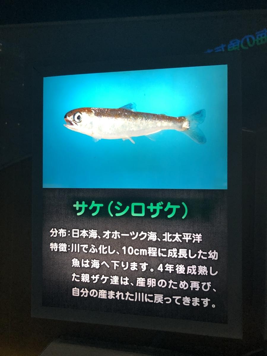 f:id:shimizu_blog:20190511234244j:plain