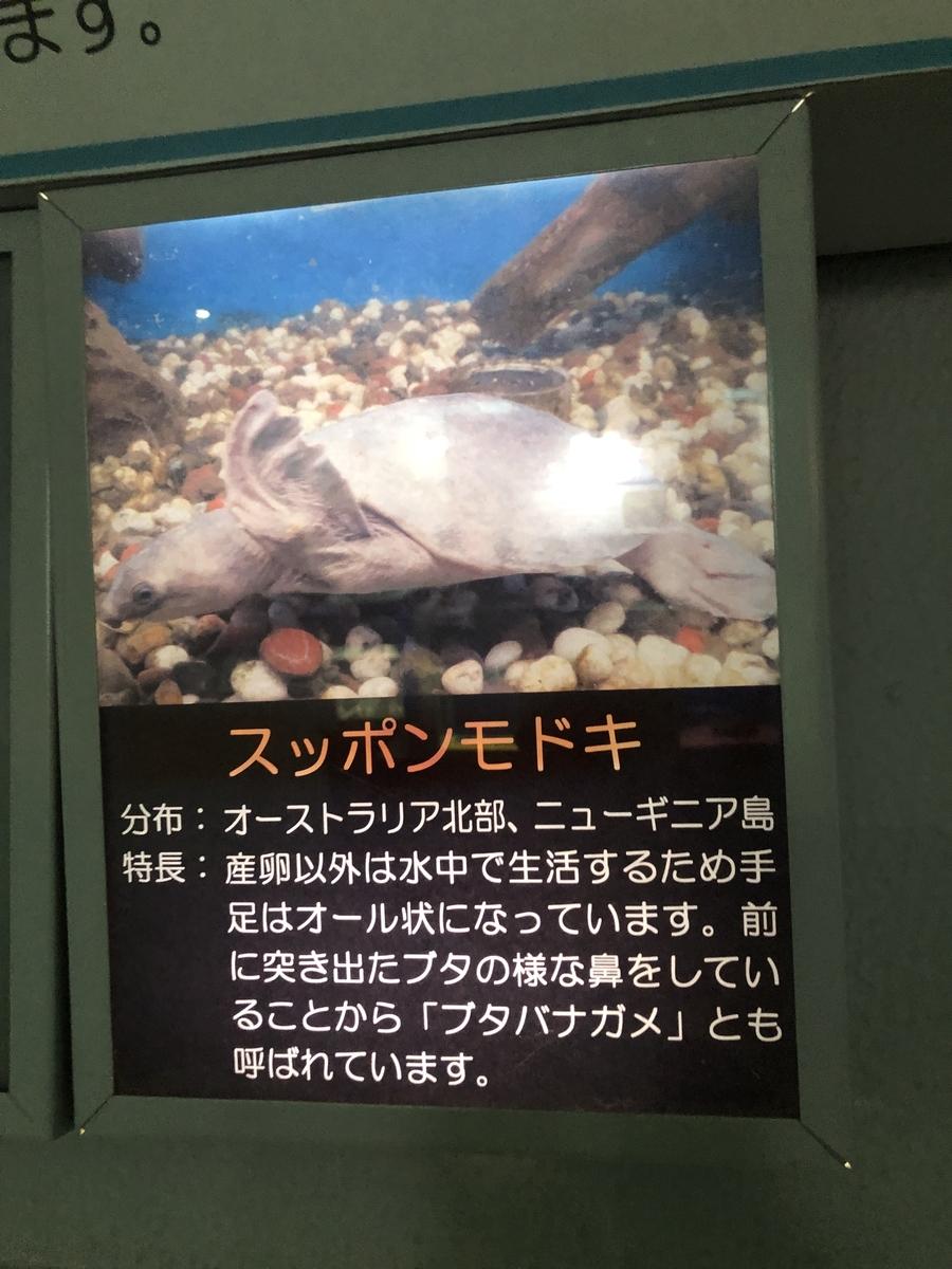 f:id:shimizu_blog:20190513003000j:plain