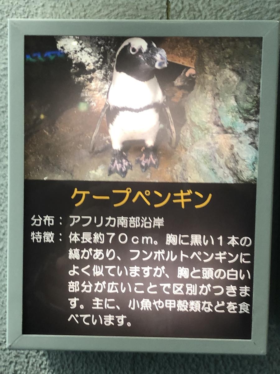 f:id:shimizu_blog:20190513010338j:plain